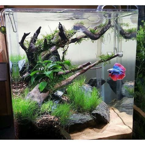 aquascape with driftwood and rocks aquarium ideas