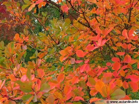 pigeon a cuisiner conserver les plus belles feuilles d 39 automne