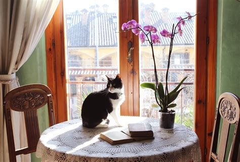 The Living Room Or Not Cat by Wallpaper Window Orchids Table Wood Books House