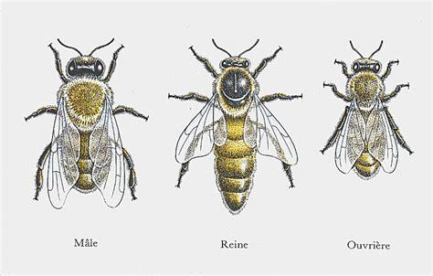 si鑒e social d une association les outils de l 39 apiculteur
