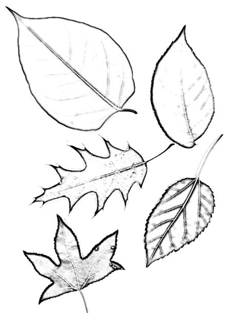 helpful art teacher drawing magnified leaves finding