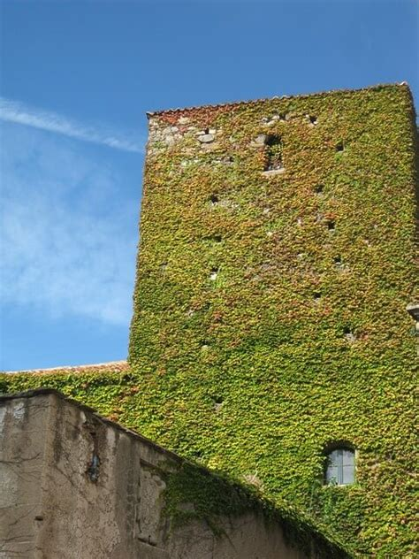 How To Start A Vertical Garden by How To Start Your Own Vertical Garden In