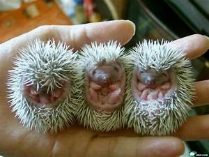 Porcupine Babies from Lyndee's Pet Sitters in Litchfield