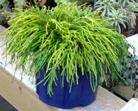 Winterharte Pflanzen Balkonkästen by Winterharte Balkonpflanzen Bilder Pflanzen Set F R