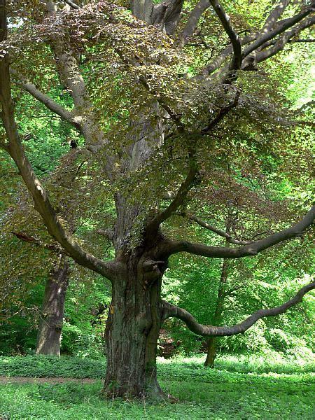 Bäume Im Garten  Naturschutz Im Garten