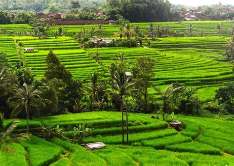 limakaki menelusuri keindahan alam indonesia  mempesona