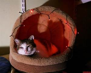 Lit Bed Up : i lit up my cats bed for christmas hes relatively nonplussed cute cats hq pictures of cute ~ Preciouscoupons.com Idées de Décoration