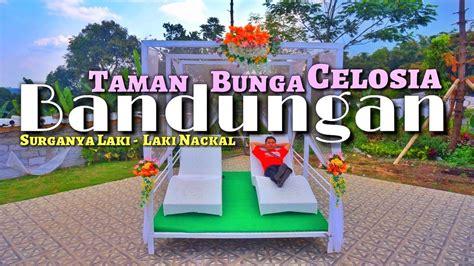 wisata taman bunga celosia bandungan kabupaten semarang