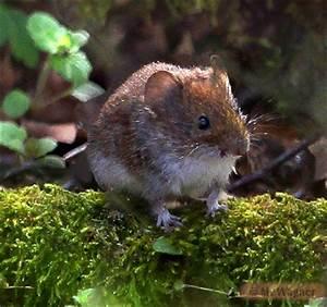 Fressen Igel Mäuse : feinde der schmetterlinge ~ Orissabook.com Haus und Dekorationen