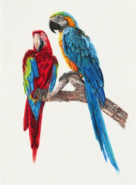 siege courtepaille oiseaux couleur soocurious
