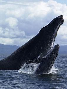 1114 best images about a whale of a tale 1 on Pinterest ...
