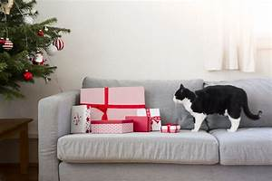 best sofa material for pet owners infosofaco With best sofa for dog owners