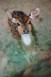 Deer Pictures, Photos, and Images for Facebook, Tumblr ...