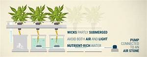Everything You Need To Know About Hydroponic Wick Systems