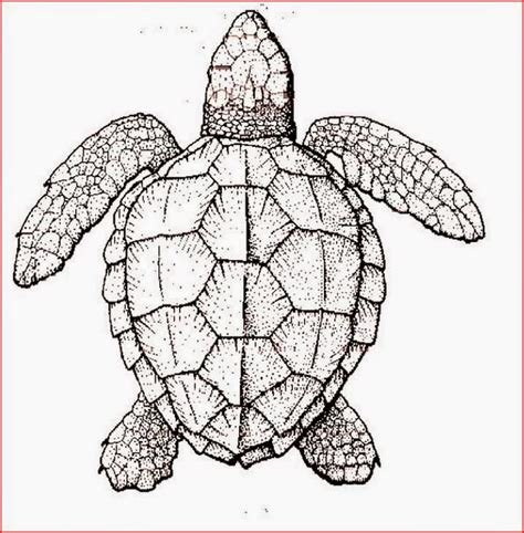 coloring pages turtles  printable coloring pages