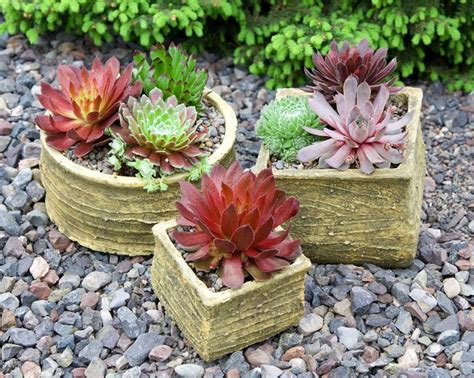 order succulents the 25 best ideas about where to buy succulents on pinterest succulent gardening indoor