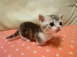 tiny cats tiny kitten pictures photos and images for