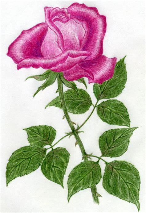 draw  rose quickly simply  easily