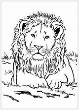 Lion Coloring Pages Simple Animals Children Animal sketch template