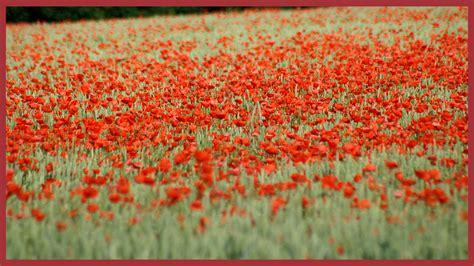 bbc school radio assemblies ks remembrance day