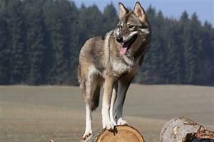 Web Earth Online • View topic - There's no escape... (Fox ...