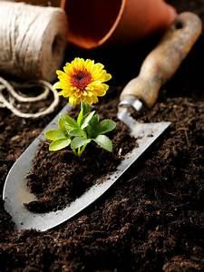 Sterilizing, Potting, Soil