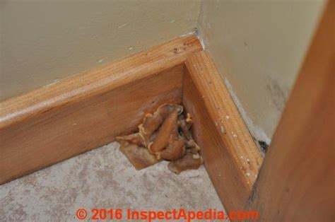 Mold commonly found in indoor dust samples, mold on