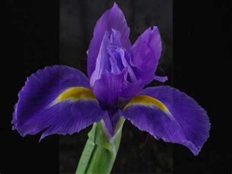 iris testo iris biagio antonacci testo e