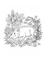 Wild Coloring Pages Pig Boars sketch template