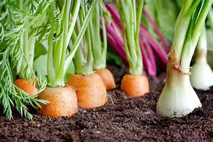 Mondkalender Für Pflanzen : pflanzen s en ernten h herer ertrag dank mondkalender ~ Orissabook.com Haus und Dekorationen