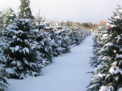 medina christmas tree farm medina oh 44256 330 723 2106
