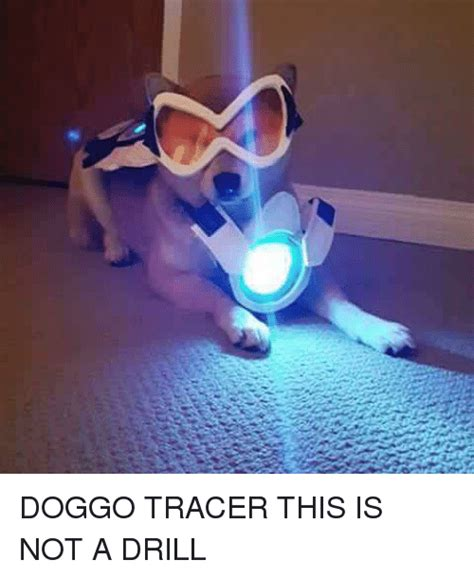 Tracer Memes - doggo tracer this is not a drill dank meme on sizzle