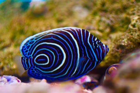 saltwater fish saltwater fish tropical lagoon aquarium
