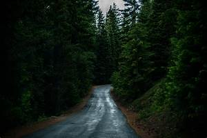 nature, , trees, , road, wallpapers, hd, , , , desktop, and, mobile, backgrounds