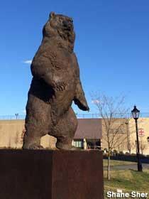 providence ri big kodiak bear