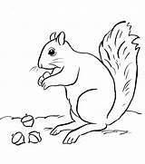 Squirrel Coloring sketch template