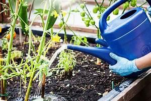 Gurken Im Hochbeet : hochbeet mit gurken bepflanzen so gedeihen sie pr chtig ~ Orissabook.com Haus und Dekorationen
