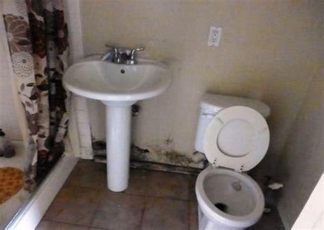 molds  bathroom dangerous black mold  bathroom