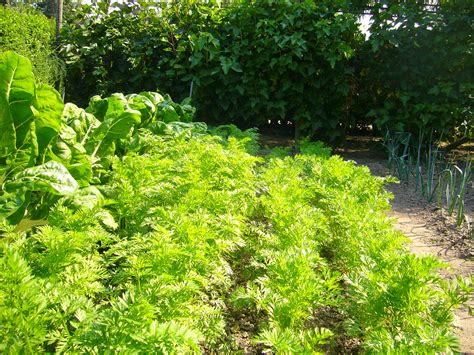 How To Start An Organic Vegetable Garden In Your Backyard by Allotments Container Gardening