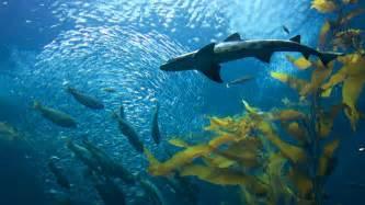 centerpiece rentals monterey bay aquarium in monterey california expedia