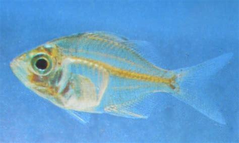 liste de poissons peu adapt 233 s 224 nos aquariums