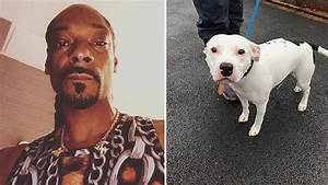 Snoop Dogg Wants To Adopt Abandoned 'Snoop The Dog'