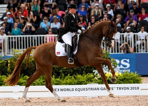 horse andalusian dressage breeds lusitano these popular most