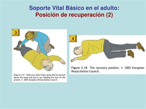 ppt rcp b 225 sica soporte vital b 225 sico powerpoint presentation id 5793612