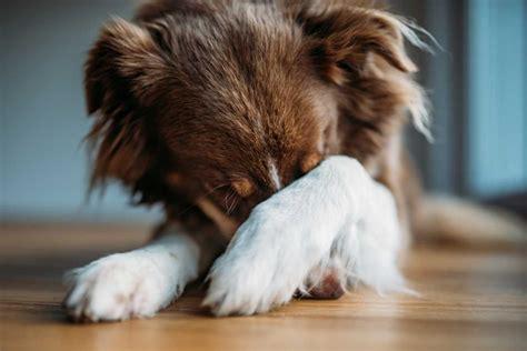 uebermaessige angst beim hund mit homoeopathie regulieren