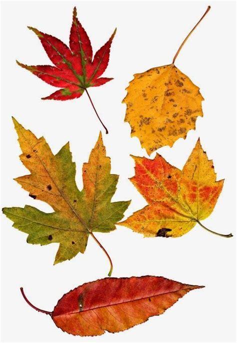 leaves inspiration magic  pinterest
