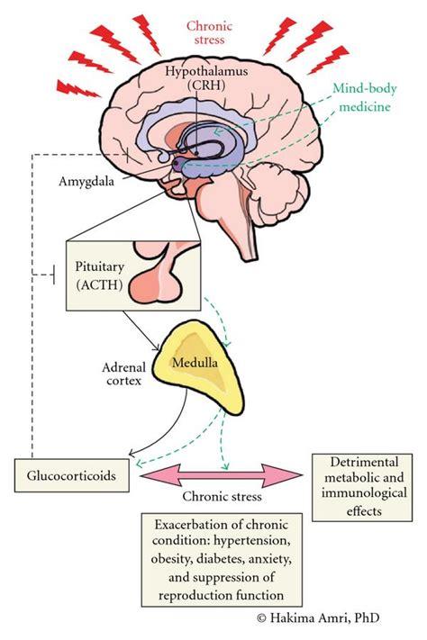 neural substrates  stress  implication