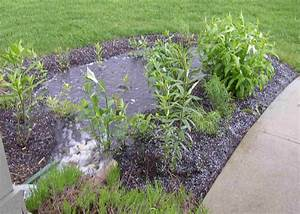 Native Plants Unlimited Rain Gardens