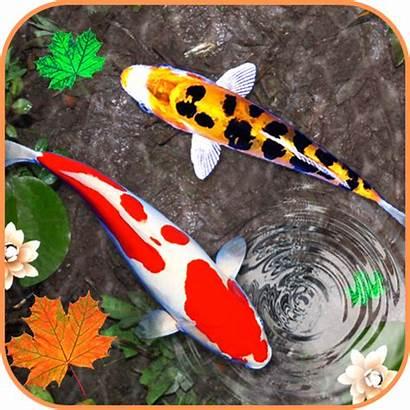 Koi Fish 3d Pc Wallpapers Icon Pngio