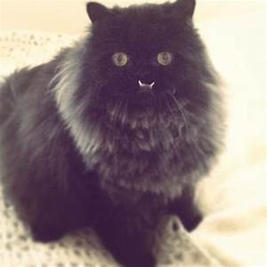 Princess Monster Truck: The Cat With an Underbite ...